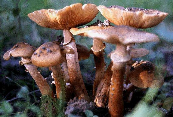 قارچ بیماری گیاهان پروژه بیماری گیاهان کشاورزی کاردانی کارشناسی انواع بیماری های گیاهان قارچ گیاهان گیاهان